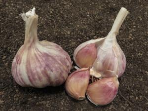 Havran Garlic