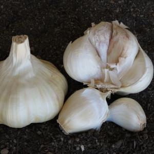 Lorz Italian Garlic